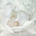 Susanne Wehmer, pintura hiperrealista, flor 03