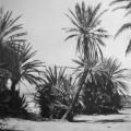 Susanne Wehmer, pintura hiperrealista, palmeras