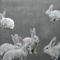 Susanne Wehmer - Pintura Hiperrealista - Bunnies #4