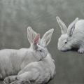 Susanne Wehmer - Pintura Hiperrealista - Bunnies #7
