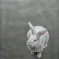 Susanne Wehmer - Pintura Hiperrealista - Bunnies #8