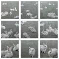 Susanne Wehmer - Pintura Hiperrealista - Bunnies Series